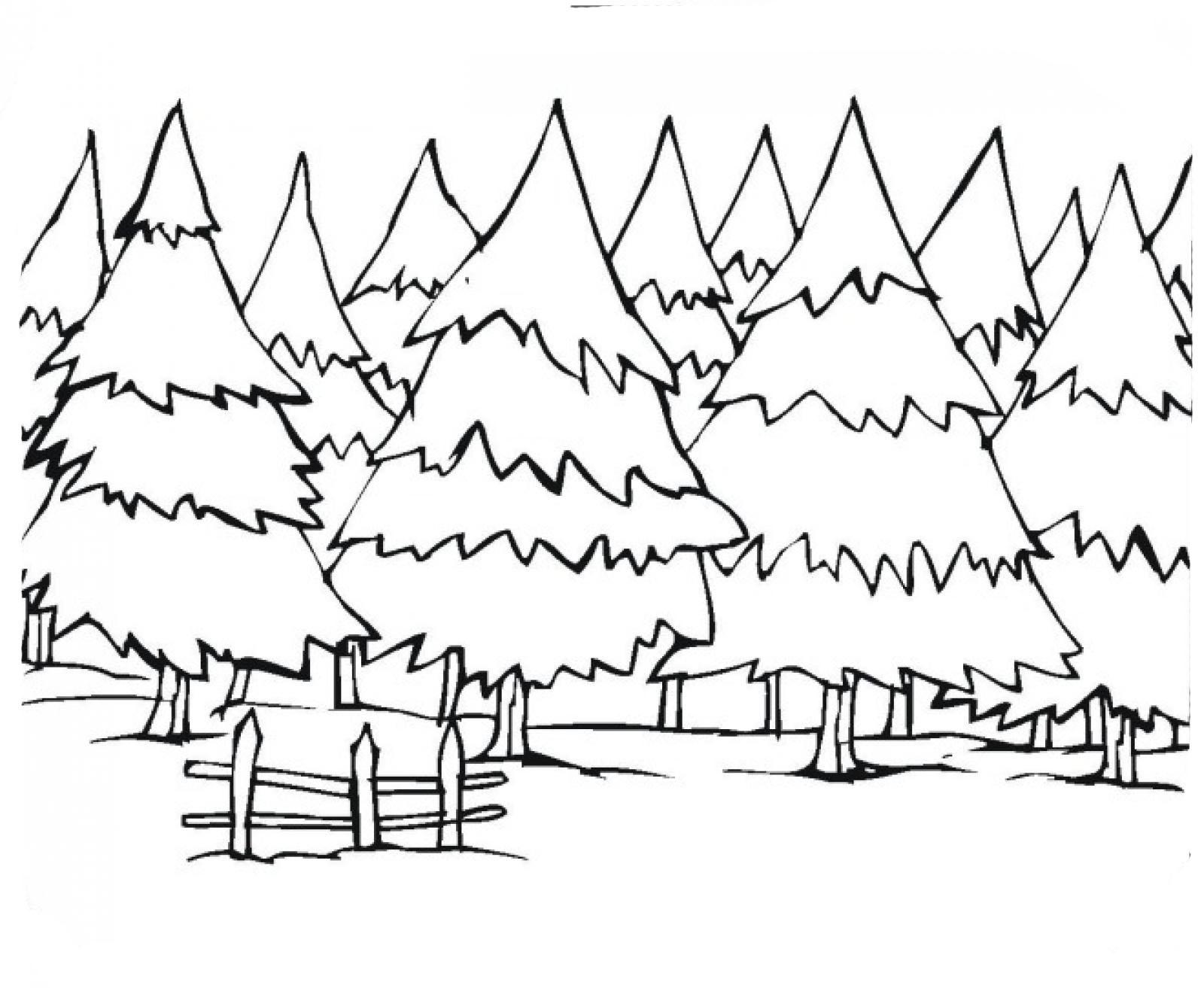 desenho de floresta de pinheiros para colorir tudodesenhos