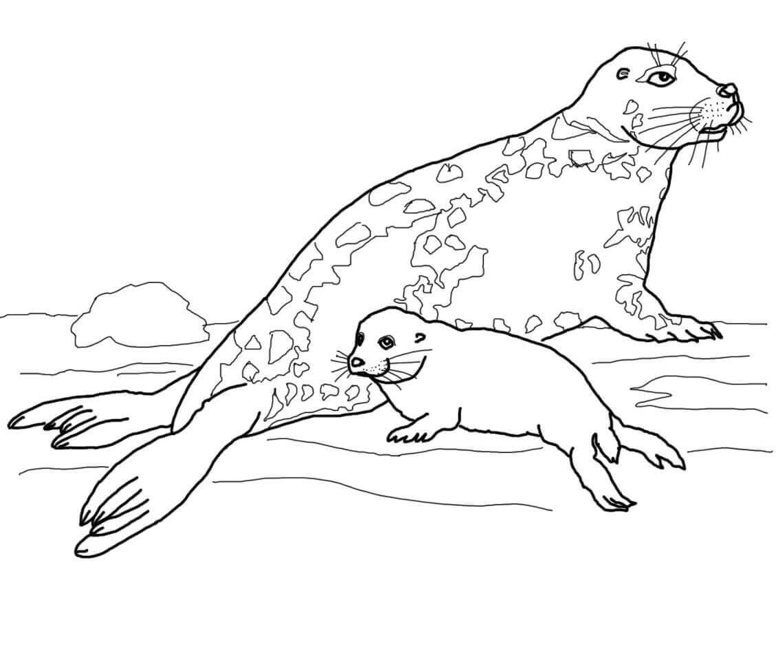 desenho de mamãe foca e filhote para colorir tudodesenhos