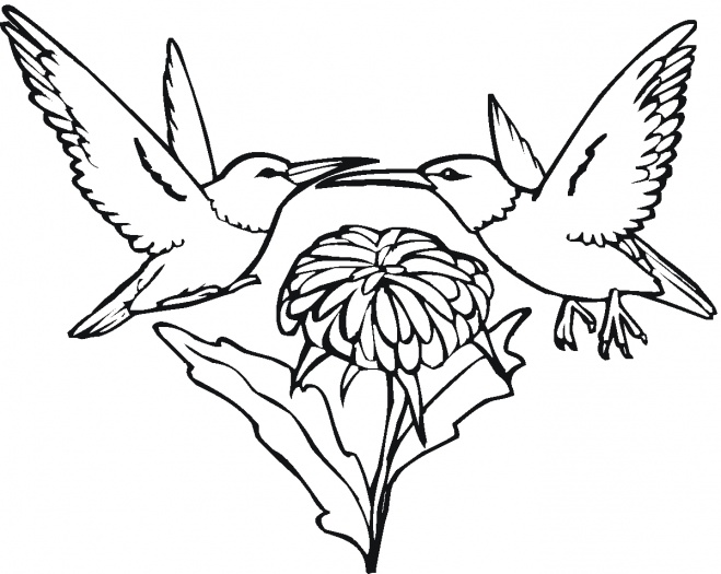 Black and white flowers drawings  magielinfo