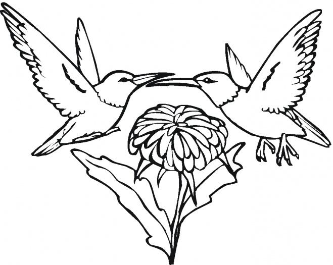 Desenho de Beija-flores para colorir - Tudodesenhos