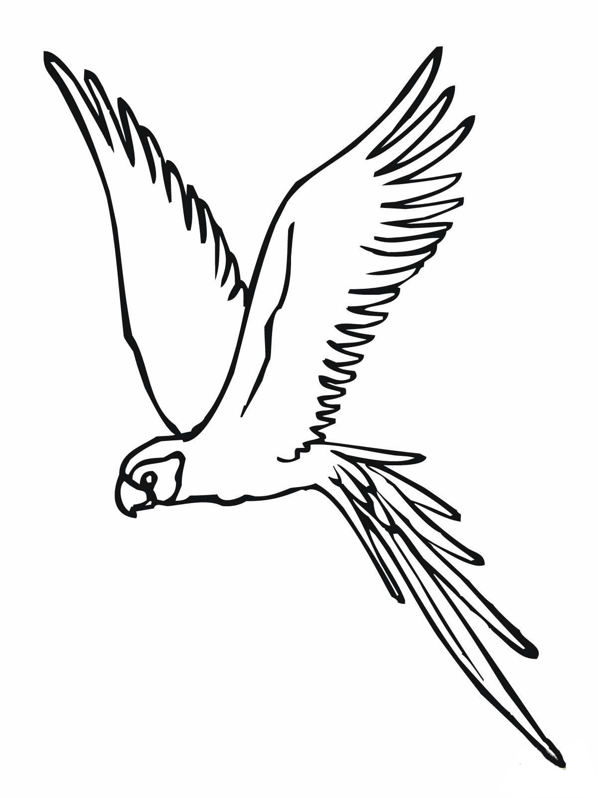 Desenho de periquito voando para colorir tudodesenhos - Coloriage perruche ...