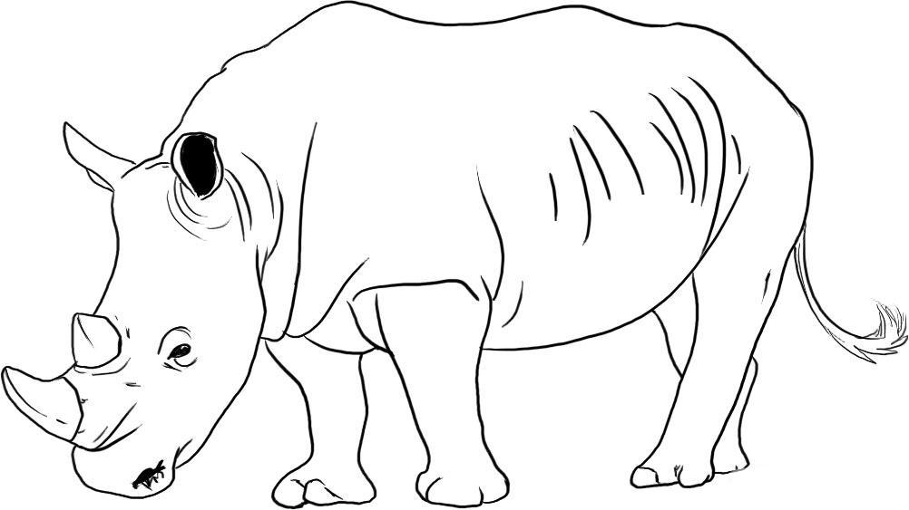 Desenho De Rinoceronte Pastando Para Colorir Tudodesenhos
