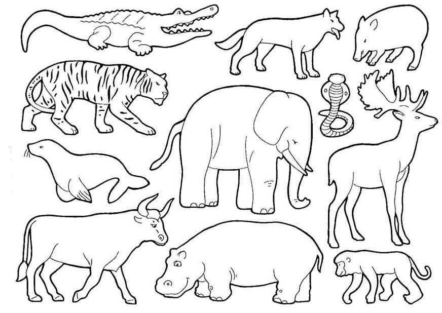 desenho de animais da floresta para colorir tudodesenhos